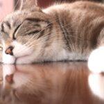 iHerb で購入できる睡眠をサポートしてくれるアロマミストやオイルバーム、精油の香りで心癒されよう